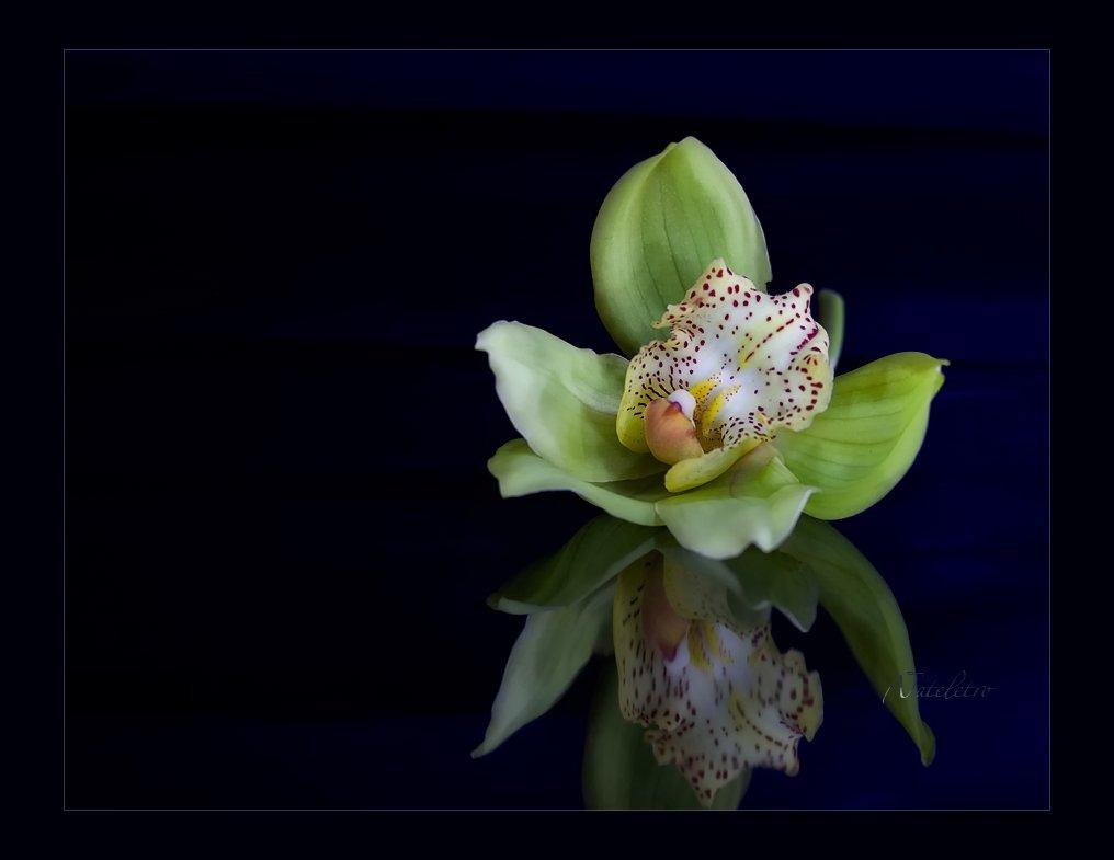 натюрморт, орхидея, световая кисть, Наталья Кузнецова (Nateletro)