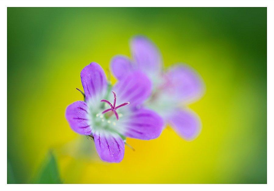 весна, нерезкое макро, Нарчук Андрей