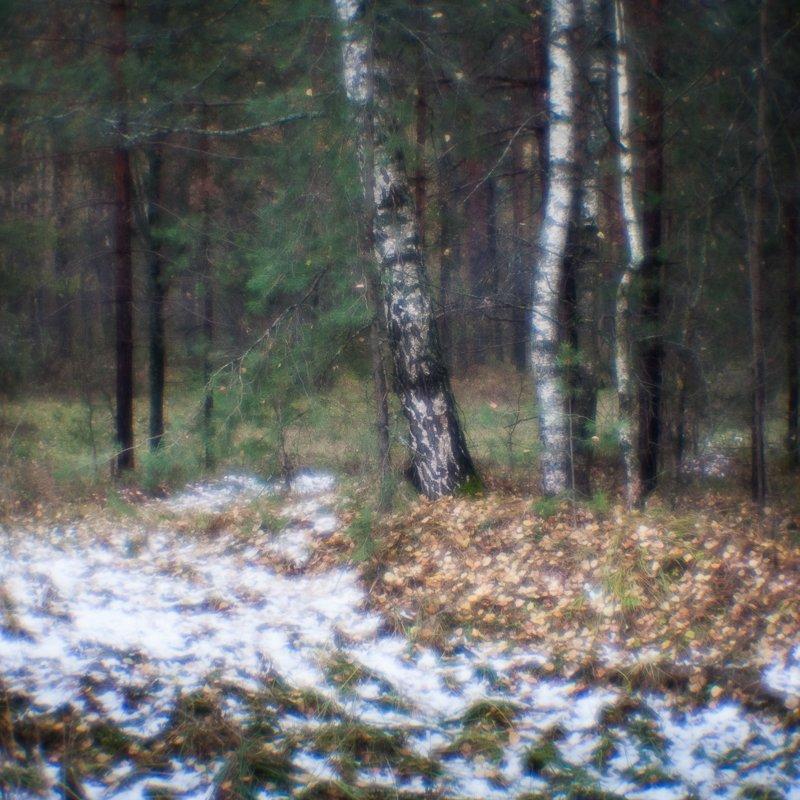 фото, монокль, природа, лес, березы, пикториализм, monolens, Шарапов Сергей