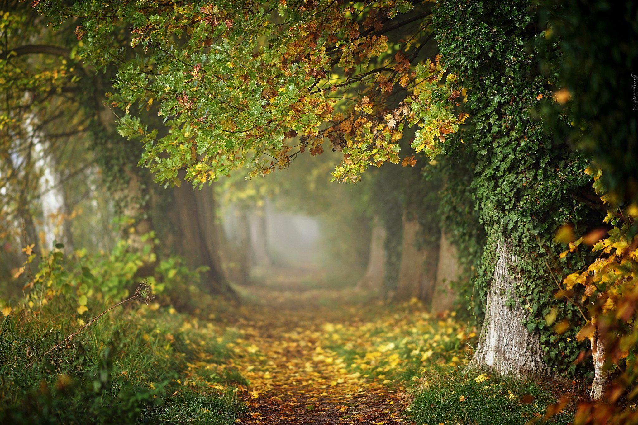 autumn magic path mist fall trees leafs grass foggy poland dranikowski jesien alley, Radoslaw Dranikowski