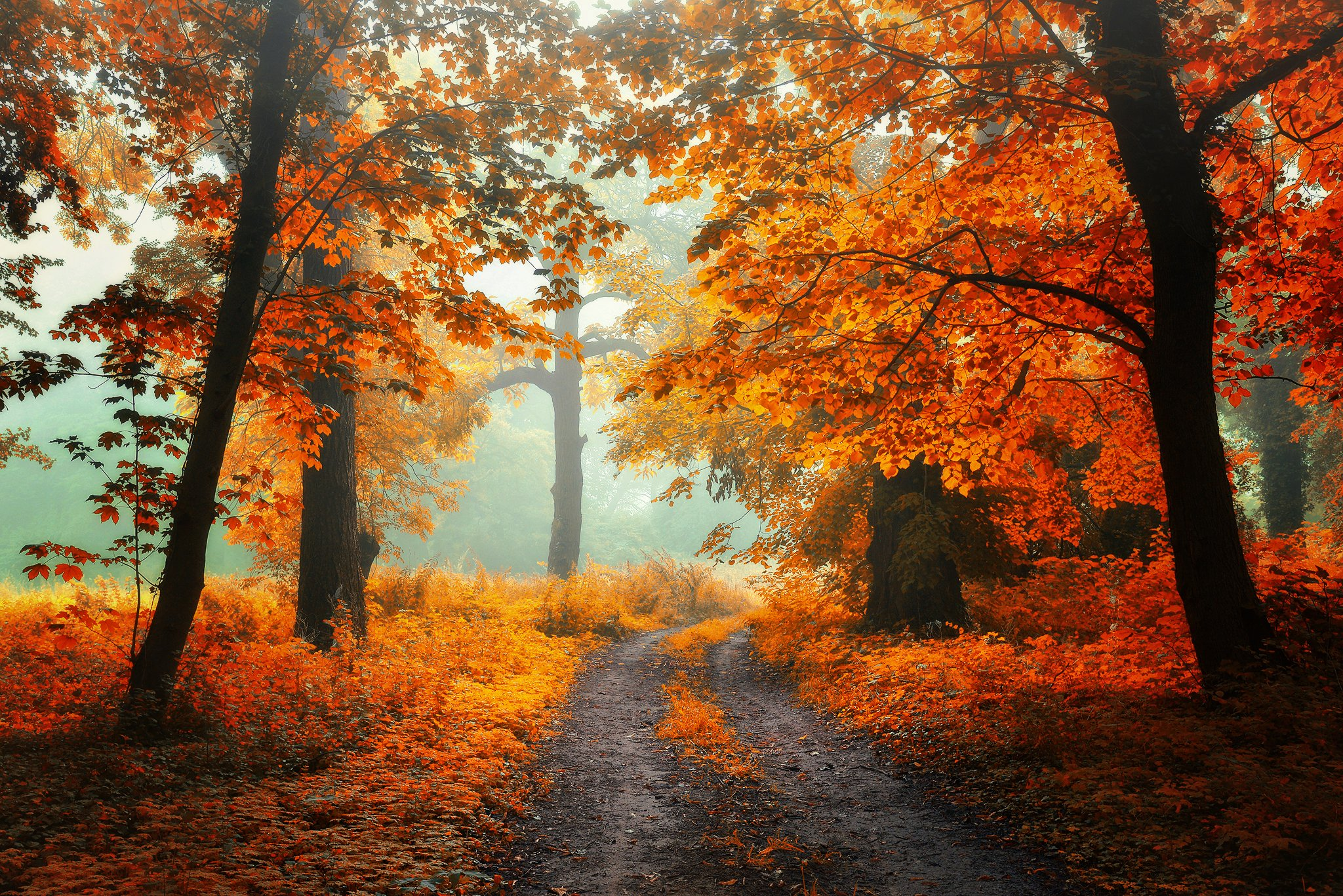 Oсенние цвета Radoslaw Dranikowski