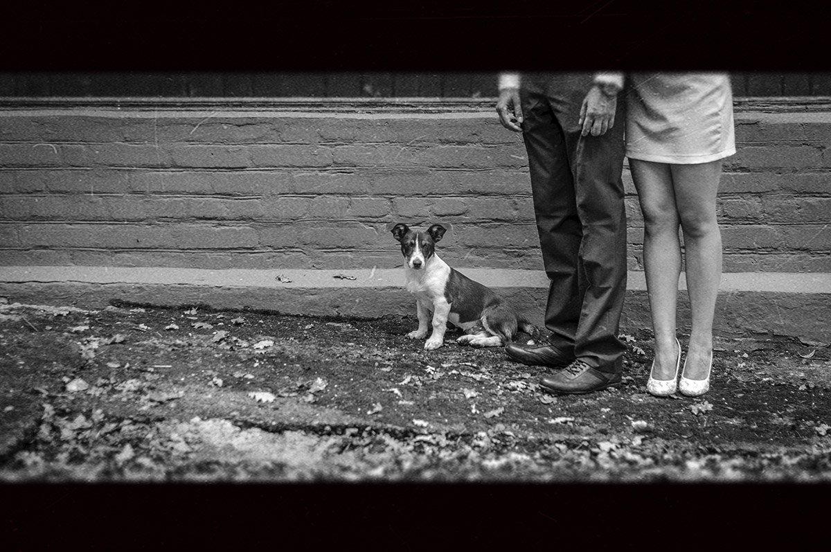 животные,собака,собачка,Ervitta Dog,девушка,мужчина,ноги,ножки,взгляд,парень,пес,ч/б,черно белое,фото,свадьба,стрит,стрит фото,репортаж,красота,, Кондратюк Андрей