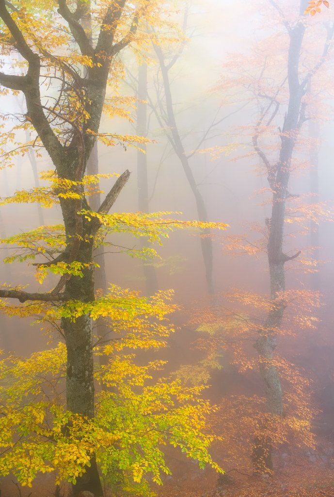 крым, туман, деревья, осень, fog, trees, autumn, Дмитрий