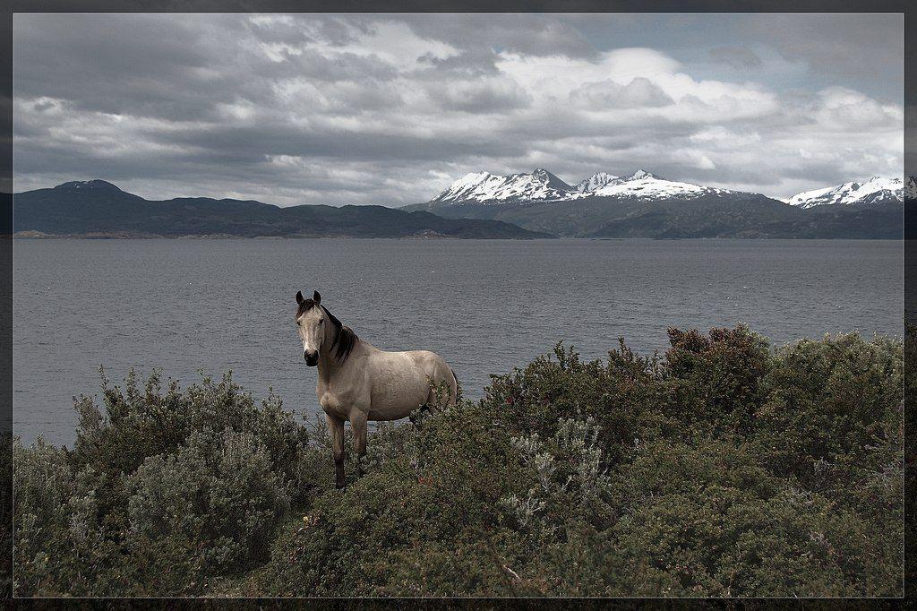 пейзаж, кони, S.K.