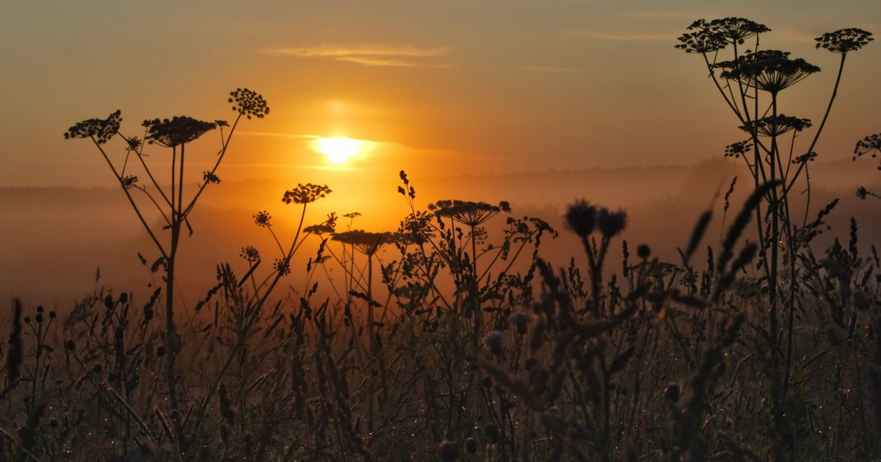 утро, рассвет,  солнце, туман, Людмила