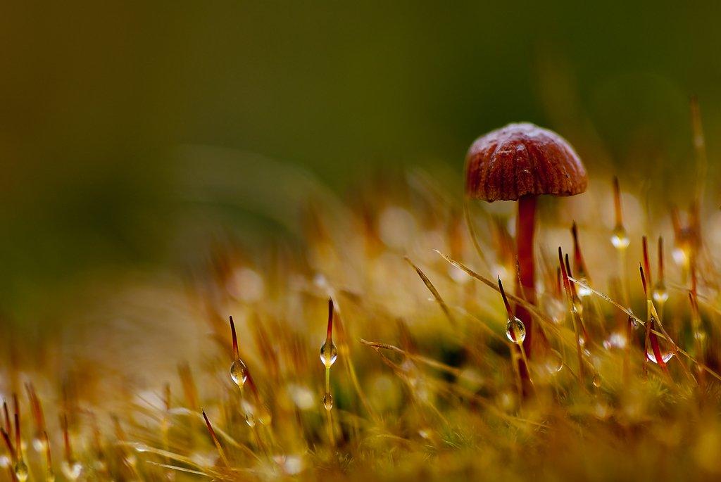 гриб, осень, Юлия