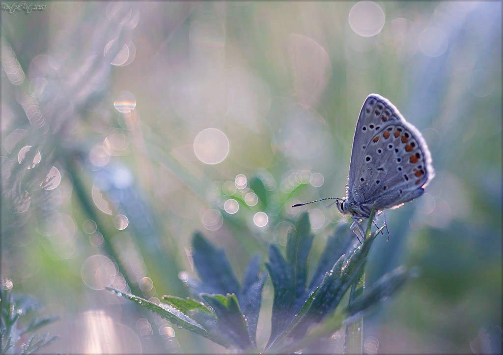 макро, бабочка, свет, роса, rostikrst, индустар, Ростислав