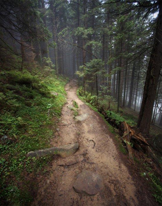карпаты, лес, утро, пейзаж, природа, панорама, Piligrim