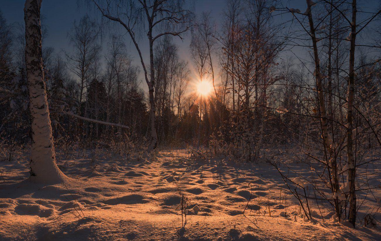 лес, зима, утро, снег, рассвет, солнце, Галанзовская Оксана