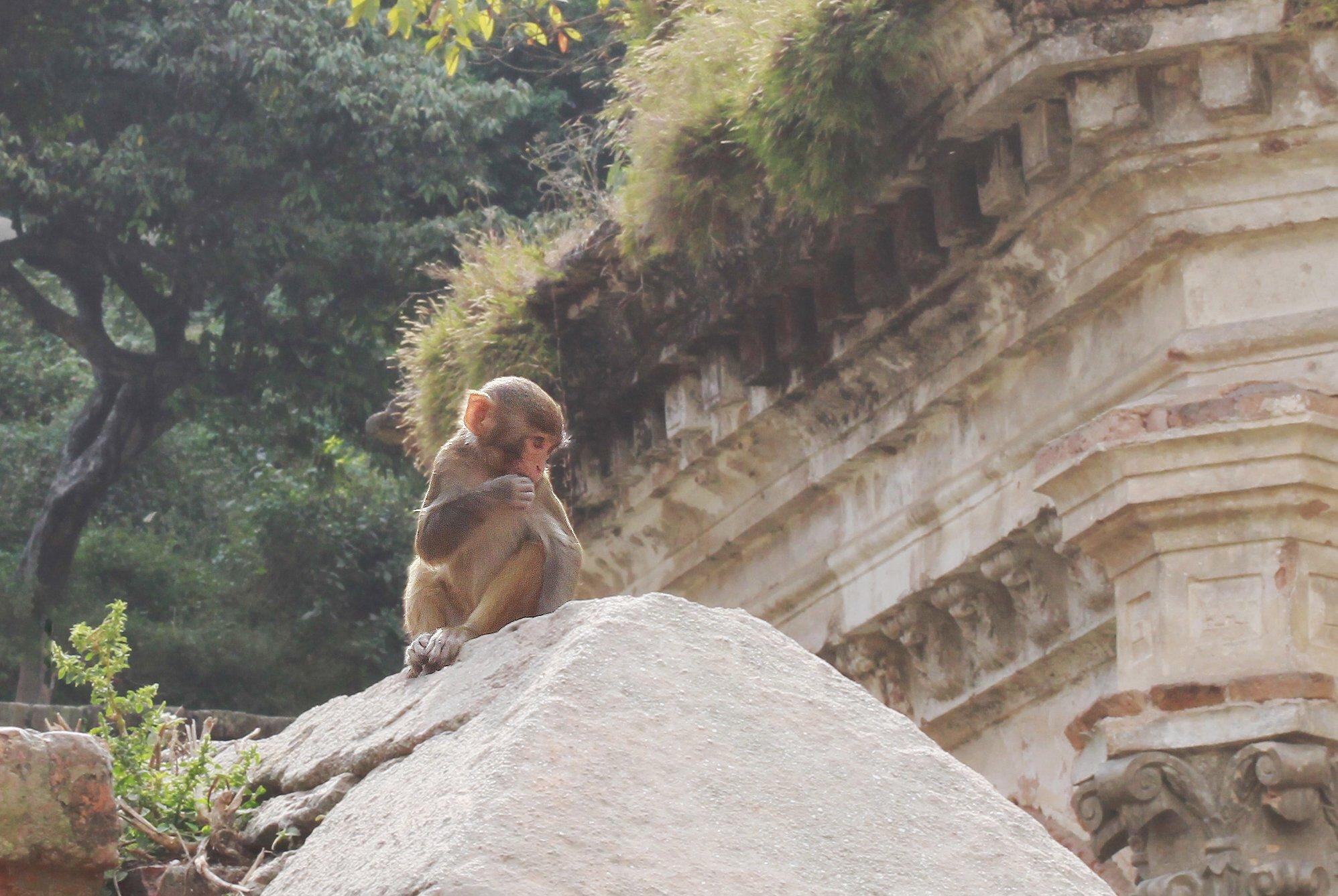животные, Катманду, Непал, Ekaterina Velichko
