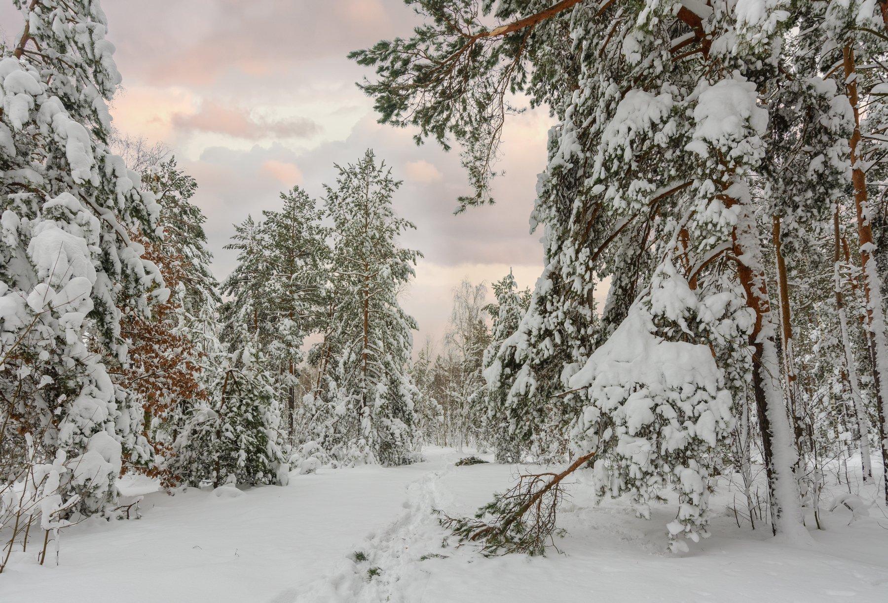 landscape, пейзаж,  лес, сосны, деревья,  природа,  прогулка,  тропинка, зима, снег, вечер, закат,, Михаил MSH
