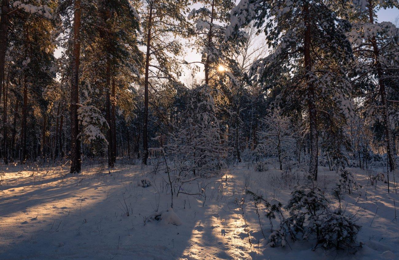 лес, зима, снег, утро, рассвет, сосны, солнце, Галанзовская Оксана
