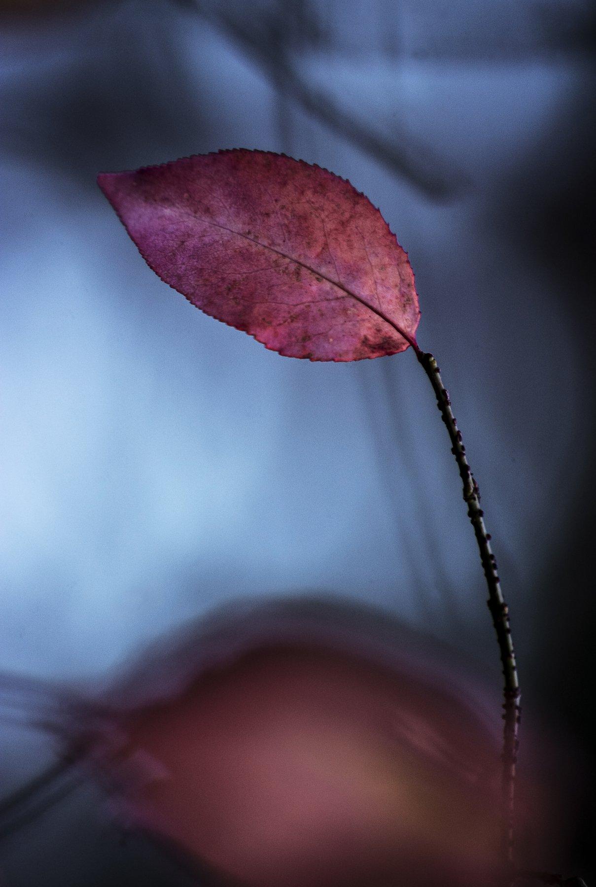 fall, autumn, autumnleaves, autumnweather, autumncolors, autumn2018, autumncolours, leaffall, autumnal, autumndays, autumntime, autumnsky, autumnstyle, falltime, season, seasons, instafall, instagramanet, instatag, instaautumn, leaf,, Денис Воронин