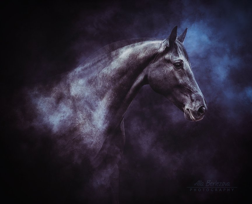 лошадь, лошади, свет, андалуз, horse, horses, light, andalusian, Alla