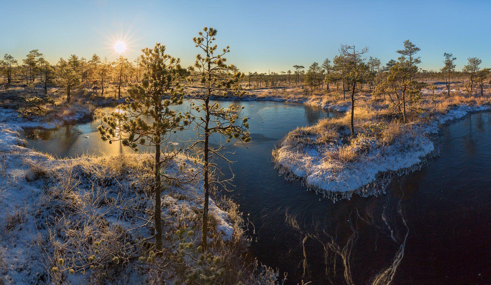 фототур, ленинградская область, деревья, сосна, болото, рассвет, иней, мороз, озеро, снег, заморозки, солнце, остров., Лашков Фёдор