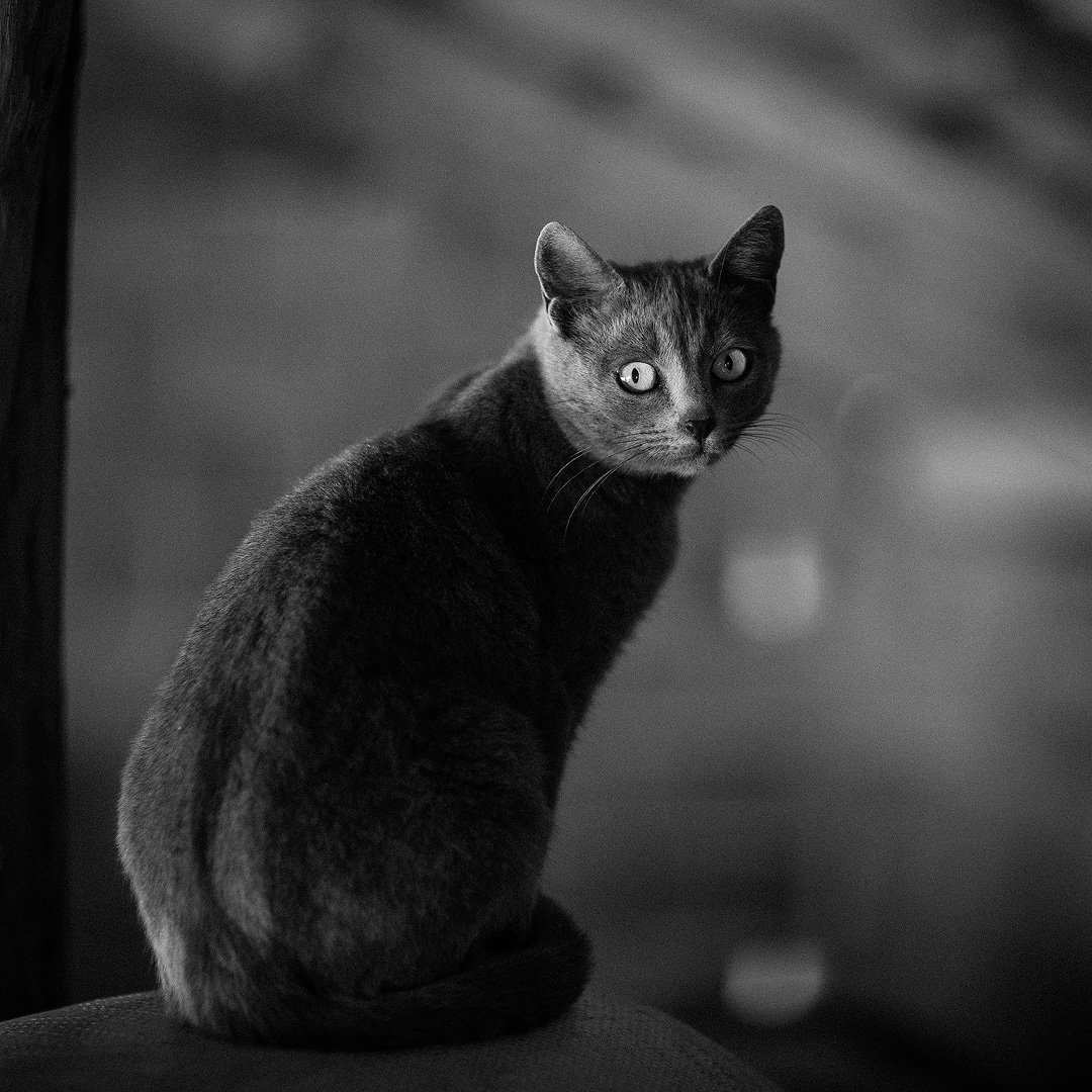 cat, Чавдар Димитров