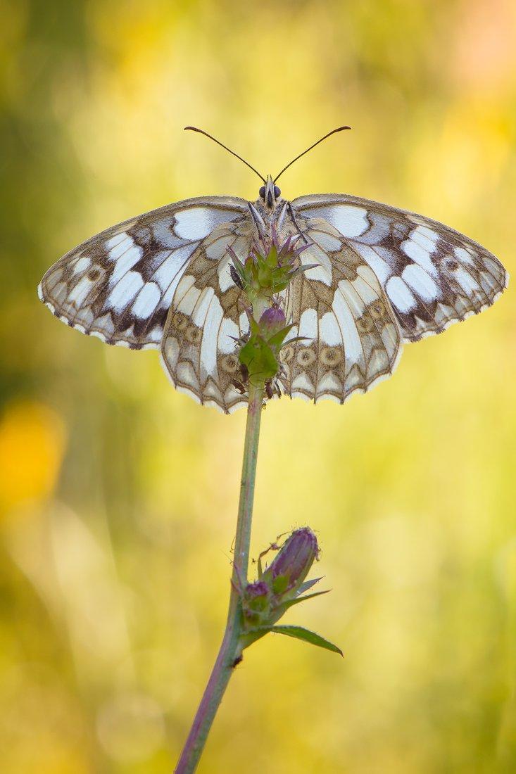 бабочка, Кузнецов Дмитрий
