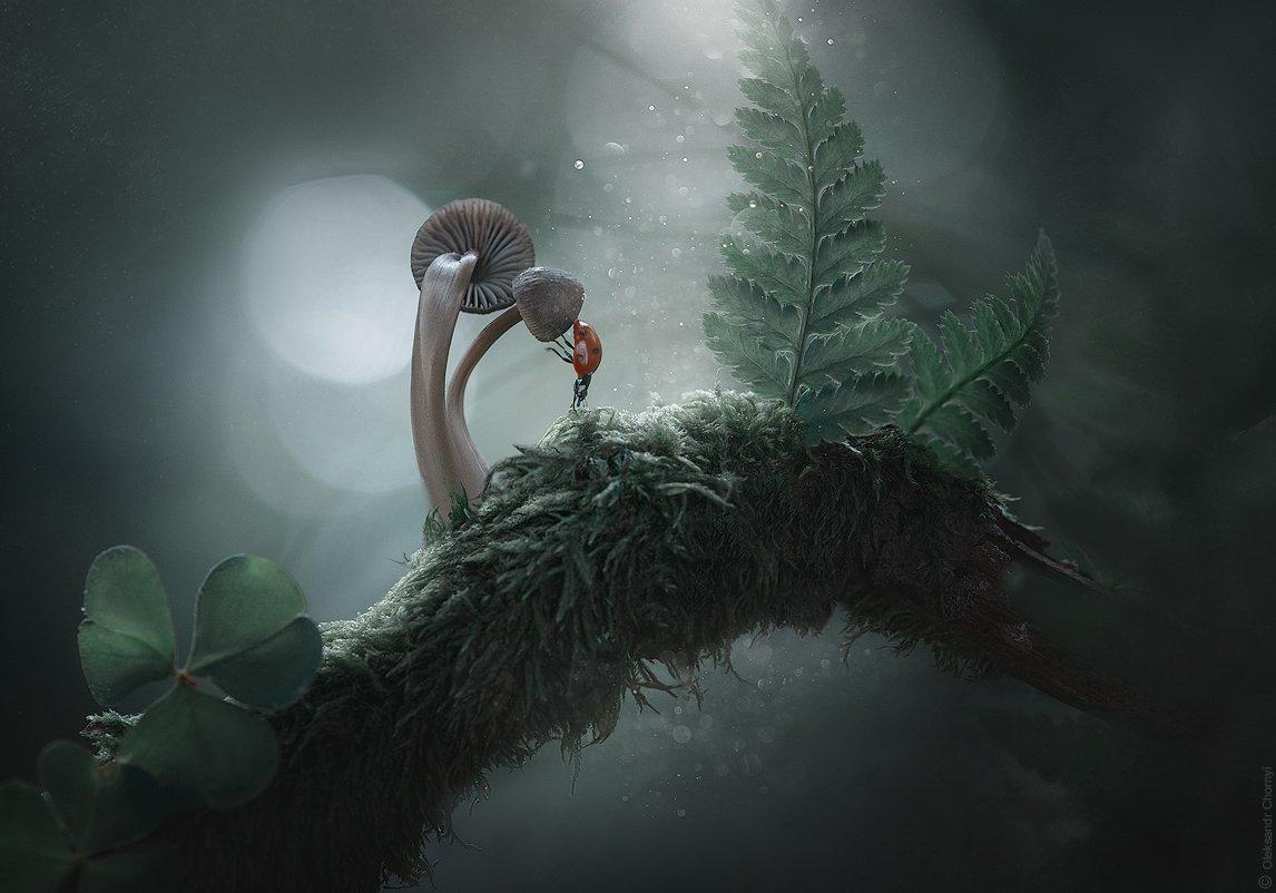 украина, коростышев, природа, лес, таинственные миры, красивая природа, гармония, загадочный, волшебство, enigmatic, божья коровка, папоротник, грибы, лес, макро, макро истории, макро мир, макро красота, сказка, цвета, зеленый,  умиротворение,, Александр Чорный