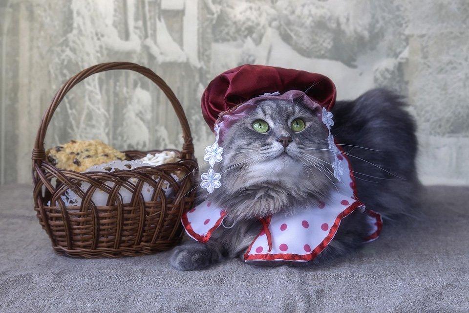 фото животных, кошка Масяня, костюм Красной Шапочки, корзинка, постановочное фото, Ирина Приходько