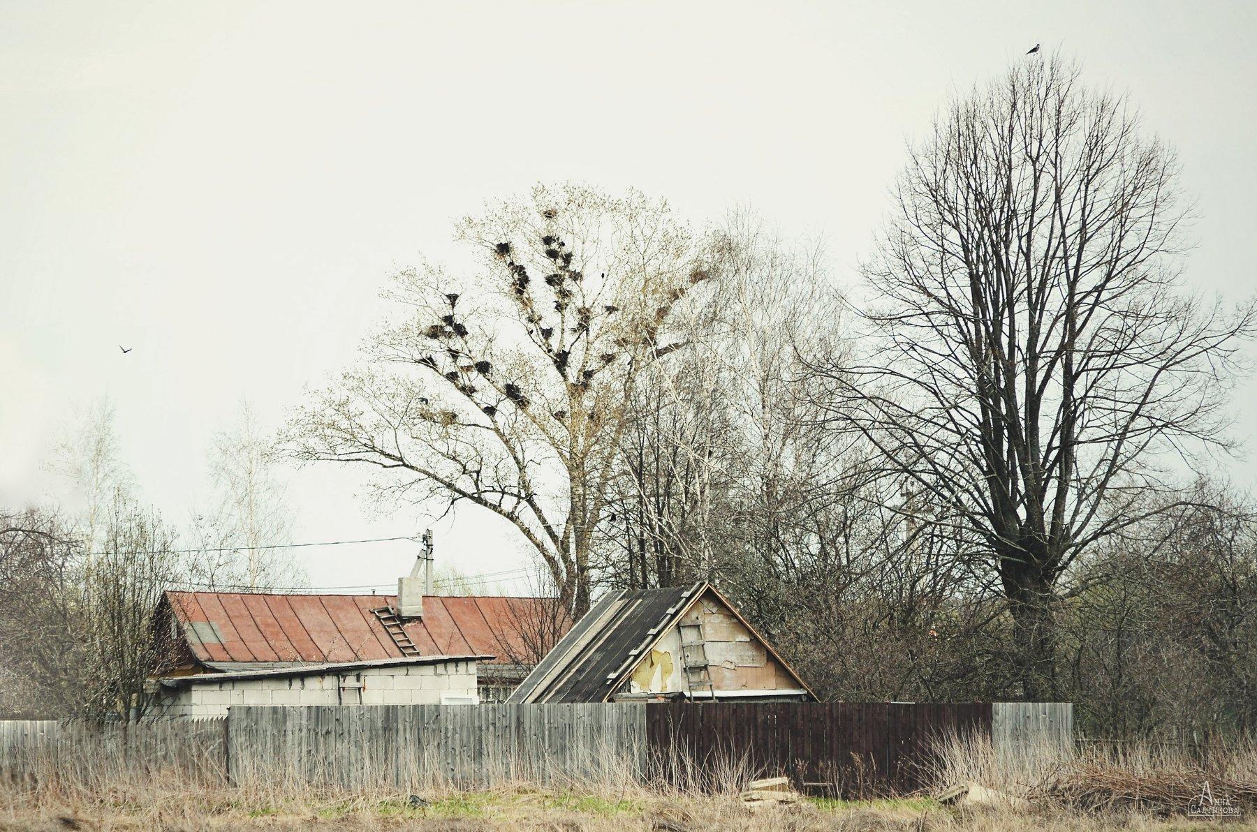 деревня, дерево, весна, гнезда, дом, пейзаж, природа, анна салтыкова, Анна Сергеевна Салтыкова (Анка)