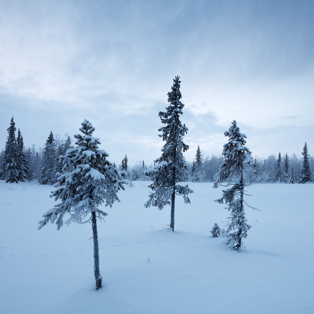 зима, снег, ель, Александр Матвеев