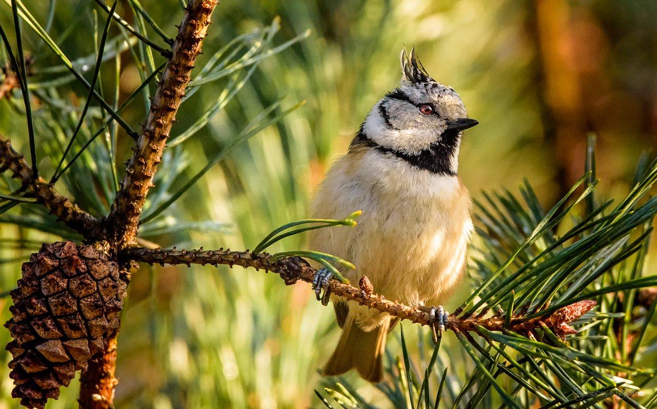 bird, Sebastian Wlodarz