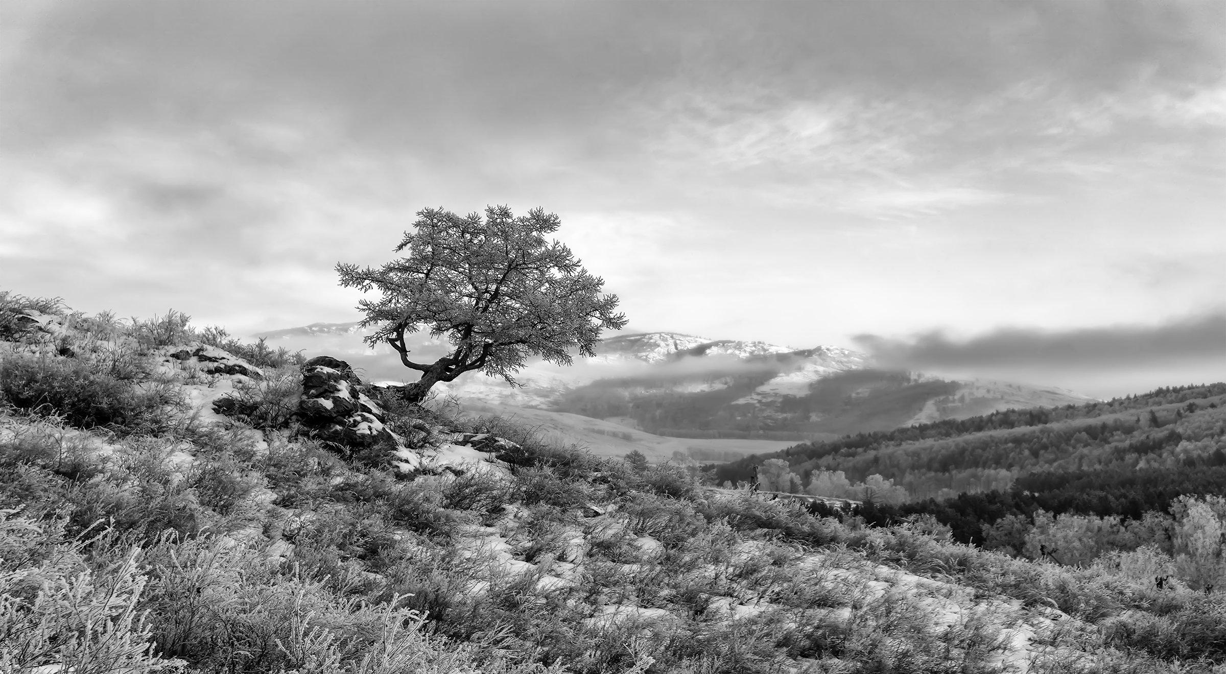 пейзаж, дерево, горы, Леонид