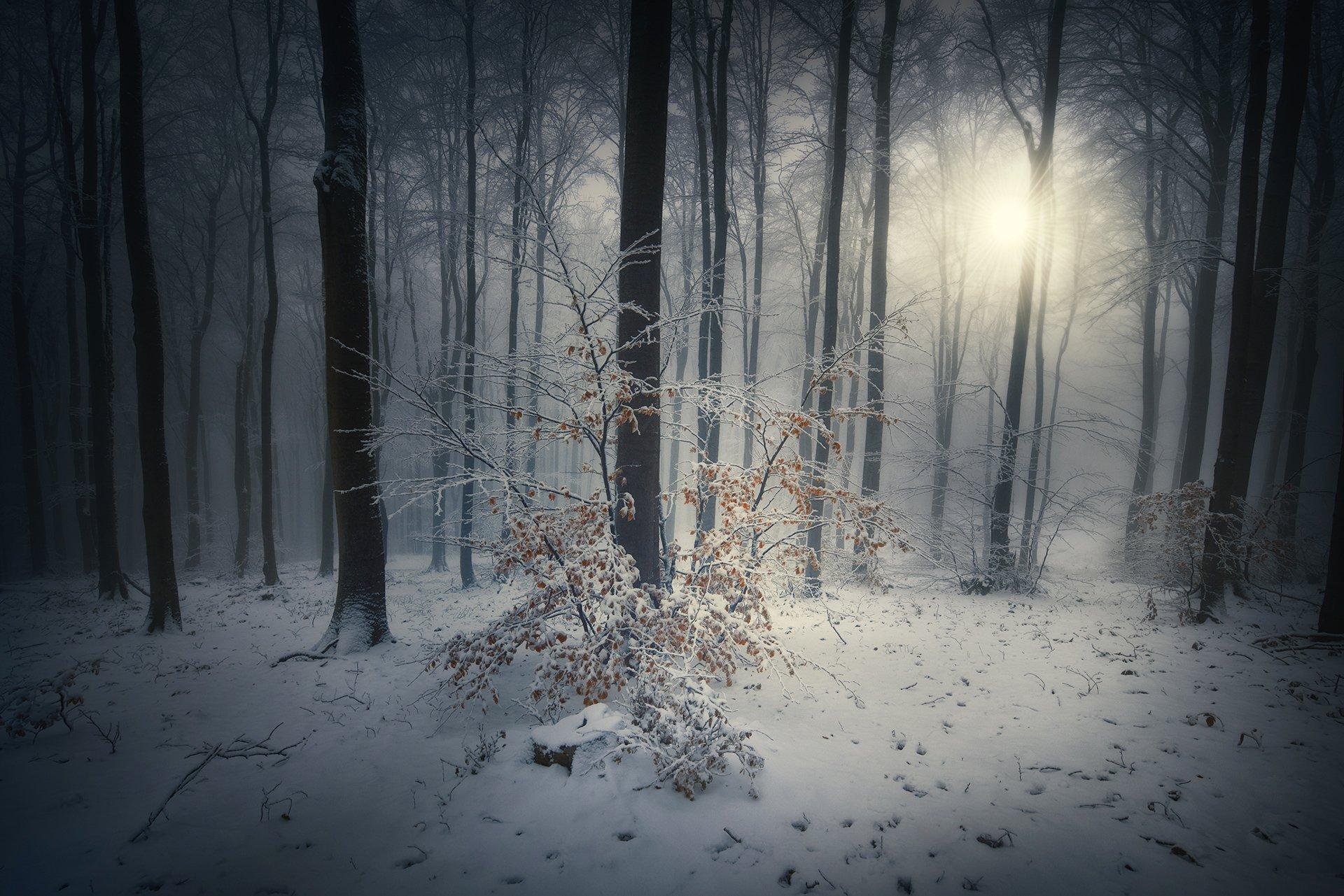 nature, landscape, forest, fog, snow, Genadi Dochev