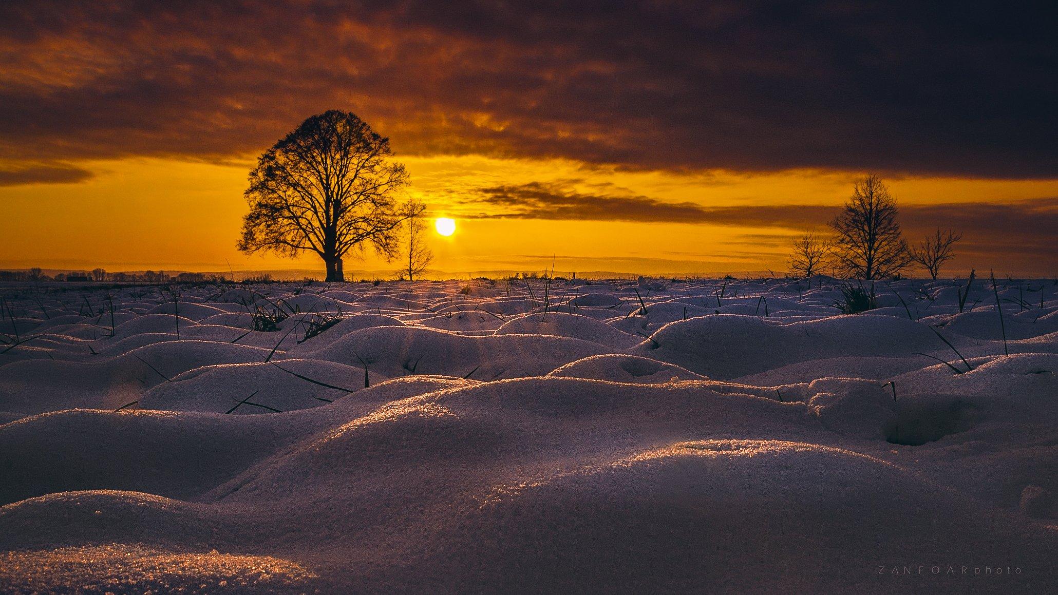 солитер,дерево, пейзаж, снег, солнце, пузыри, свечение, лучи, zanfoar, чешская республика, никон,, Zanfoar