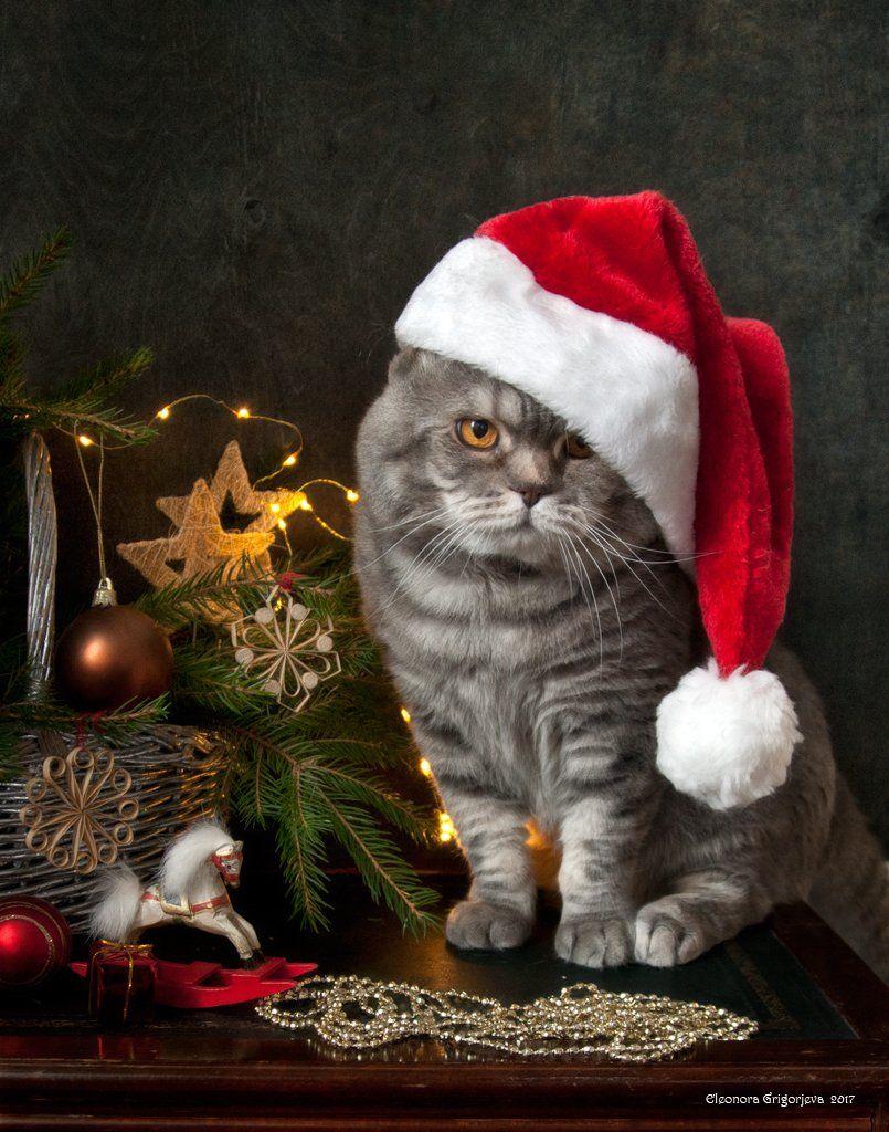 натюркотики, кот, скоттиш-фолд, новый год, Eleonora Grigorjeva