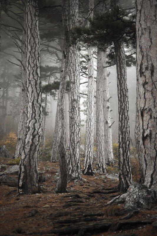 Крым, лес, сосны, горы, Алексей Медведев