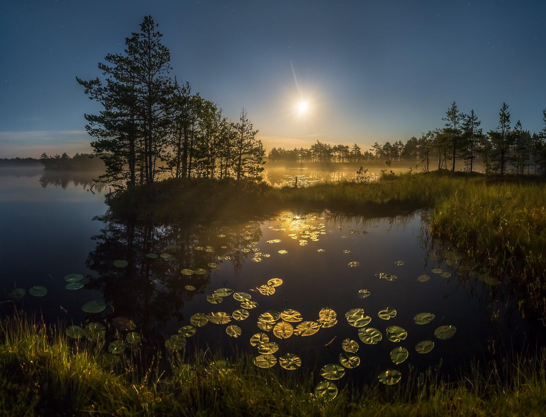 фототур, лето, ленинградская область, деревья, сосна, остров, полнолунье, луна, ночь, туман, отражение, озеро, кувшинки., Лашков Фёдор