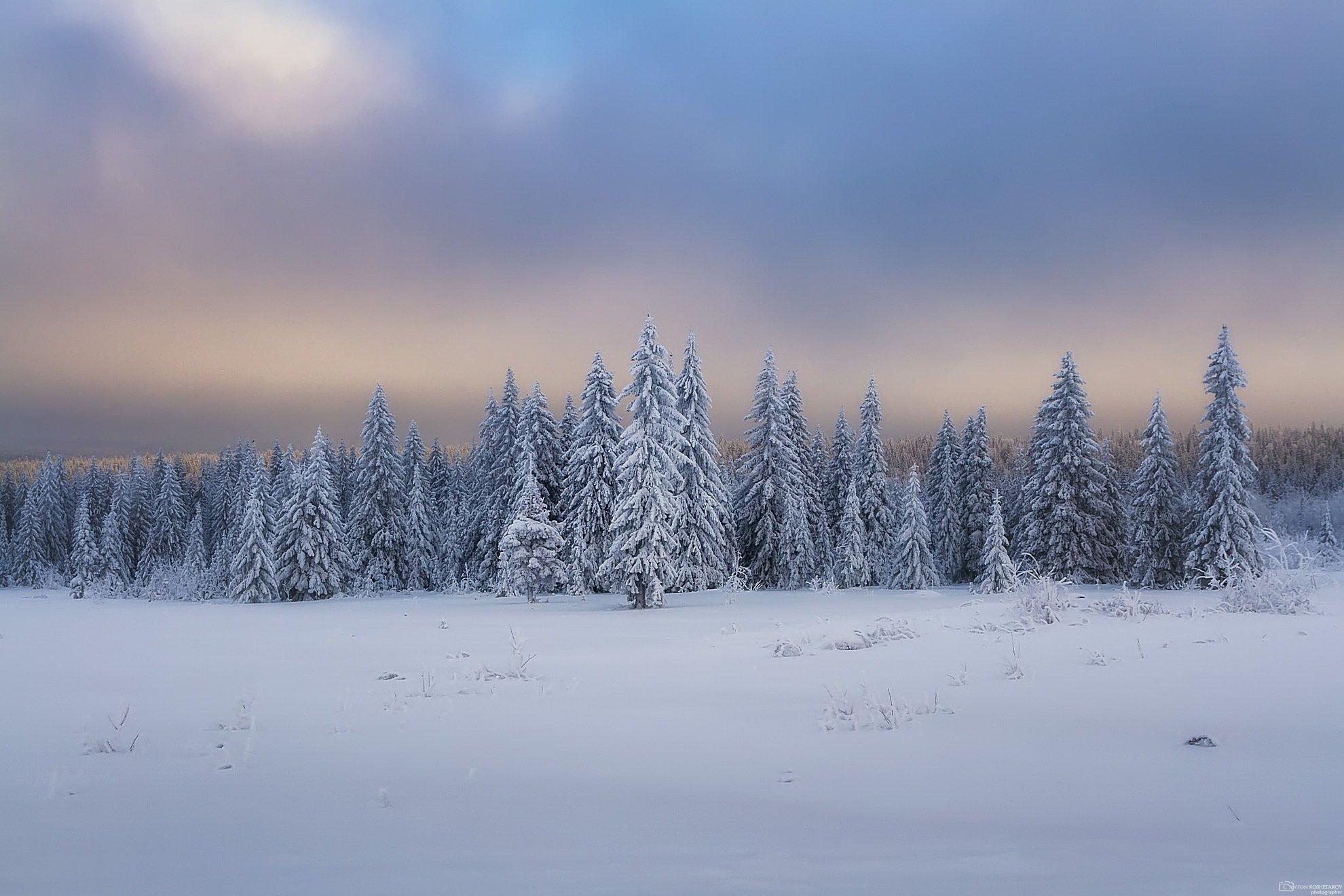 новый год,природа,зимний пейзаж,пермский край, зимняя сказка, Антон Кошетаров