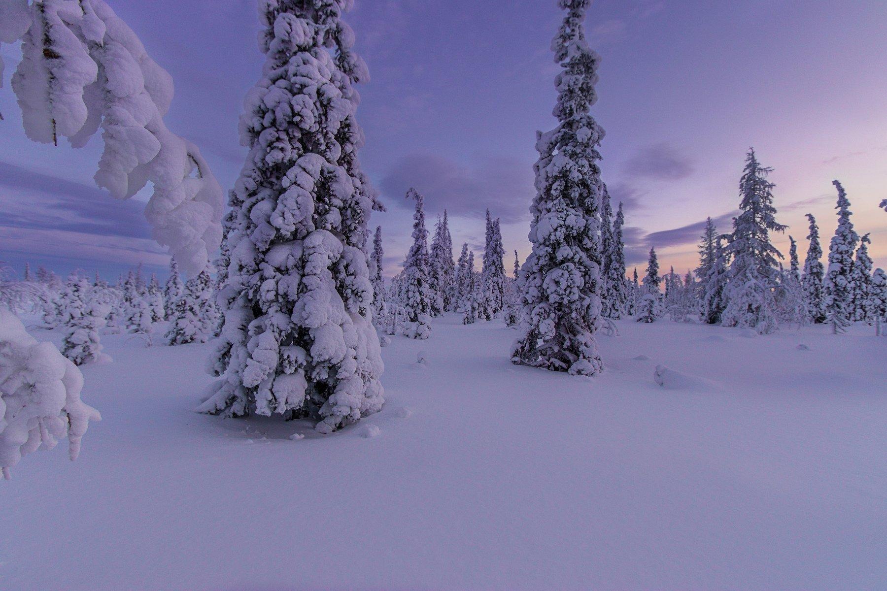 ямал , зима , природа, салехард , декабрь,  январь ,север, Братцева Анастасия