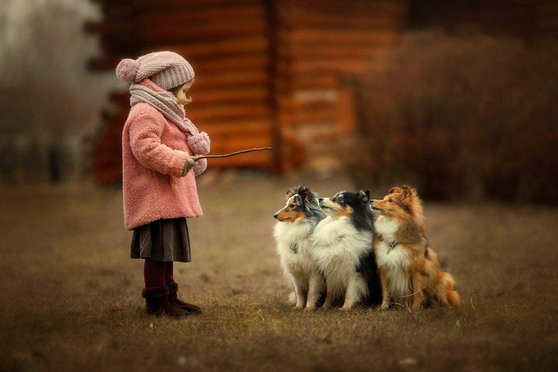 Дети, собаки, осень, девочка, шелти, Yulia
