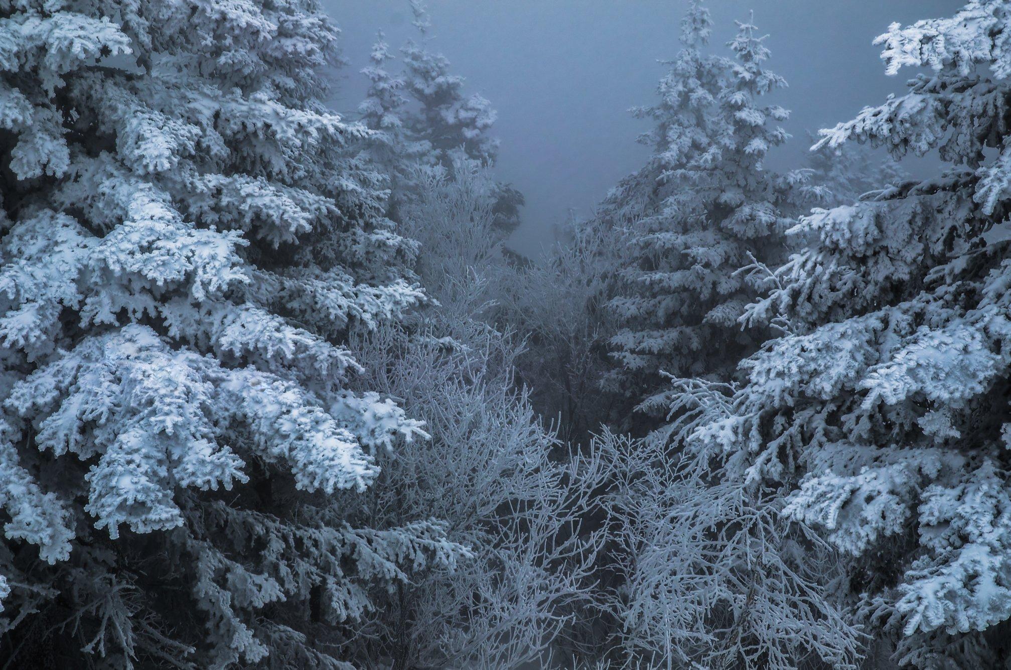 Туман Лес Зима Ёлки Снег, Виталий Берков
