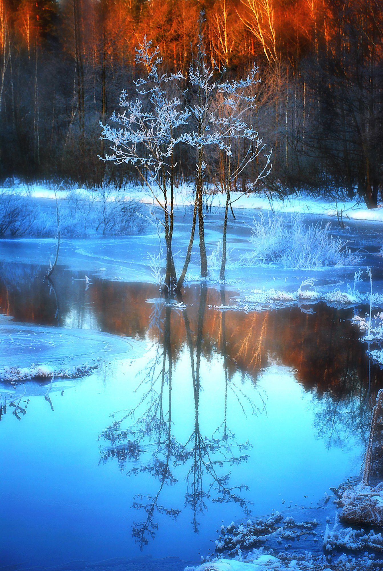 утро, мороз, болото, Владимир Штыриков