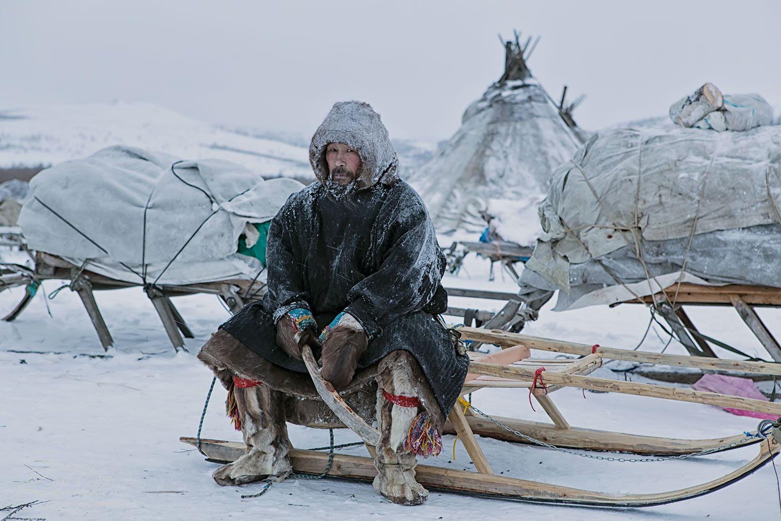 ямал, полярный урал, олени, оленеводы, ненцы, Сергей Карпухин
