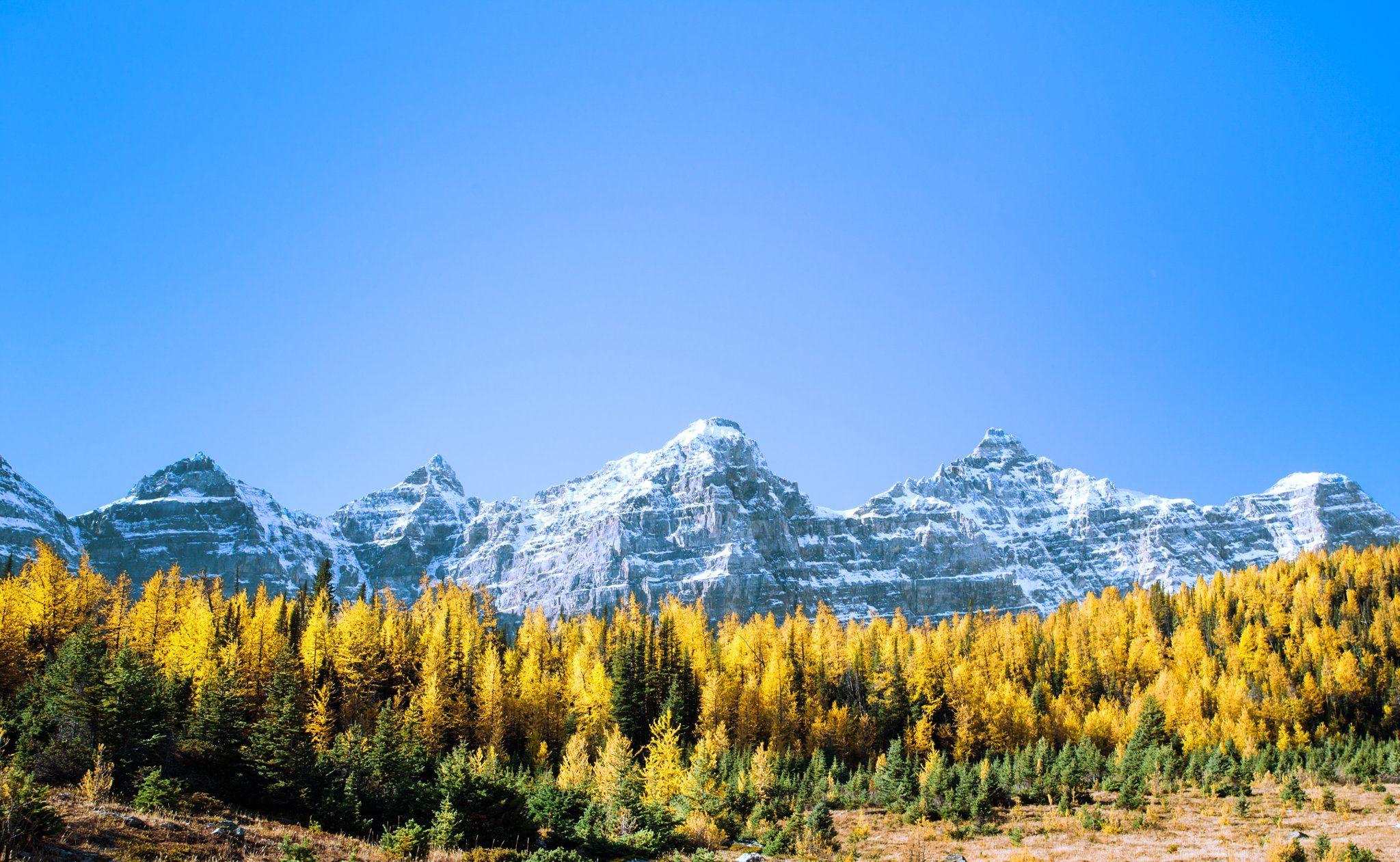 канада, альберта, банф, национальный парк, канадские скалистые горы, лиственница, десять вершин, горы, лес, золотой, желтый, природа, открытый, альпийский,canada, alberta, banff, national park, canadian rockies, larch, ten peaks, mountains, range, forest,, Марко Радовановић