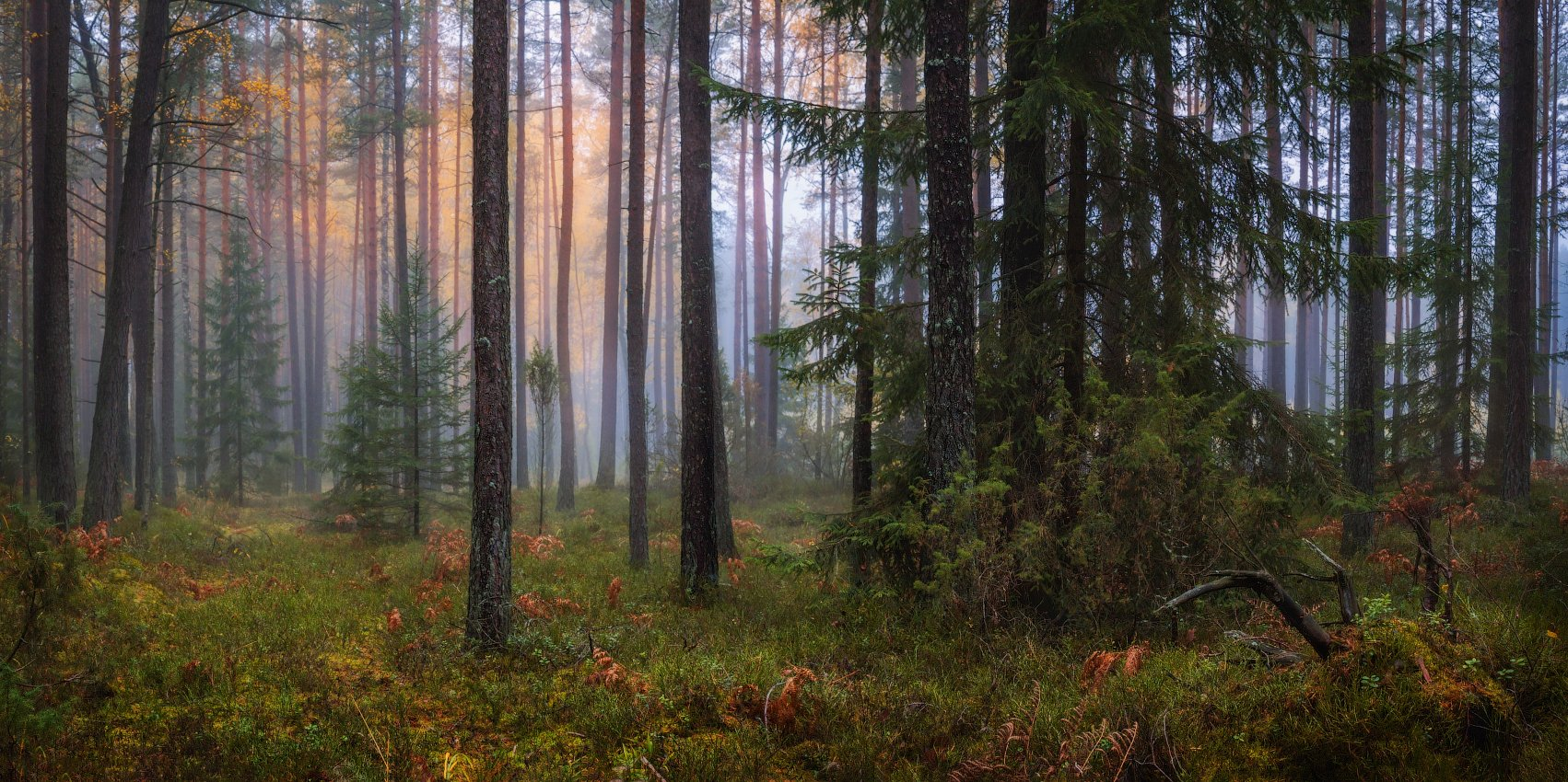 лес, осень, туман,, Сергей Шабуневич