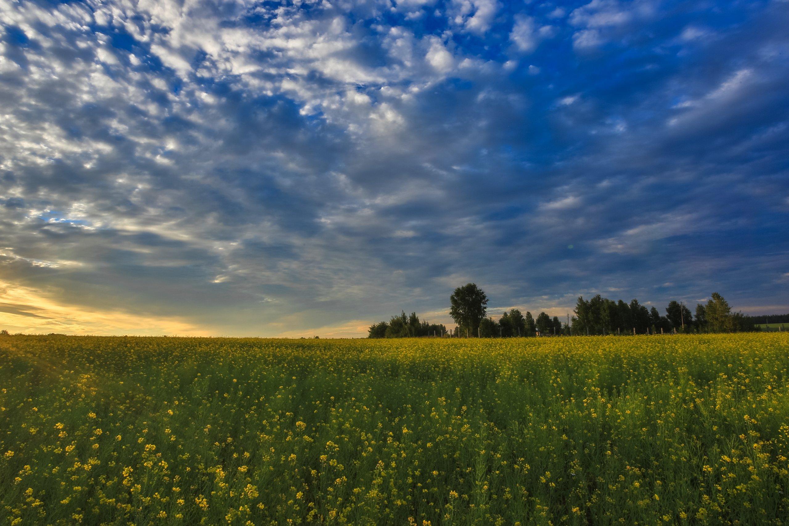 Природа, Поле, Желтые, Небо, Лето, Пейзаж, Природа, Луг, Облака, Небо, Синее, Пейзаж, Цветок, Весна, Зеленый Цвет, Рапс, Ребрук, Павел Ребрук