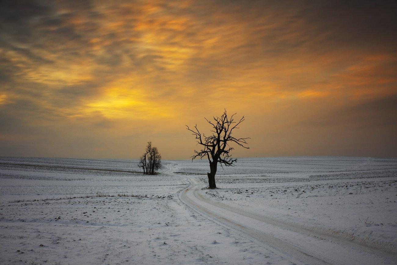 winter, tree, road, sunset, fields,, Jacek Lisiewicz