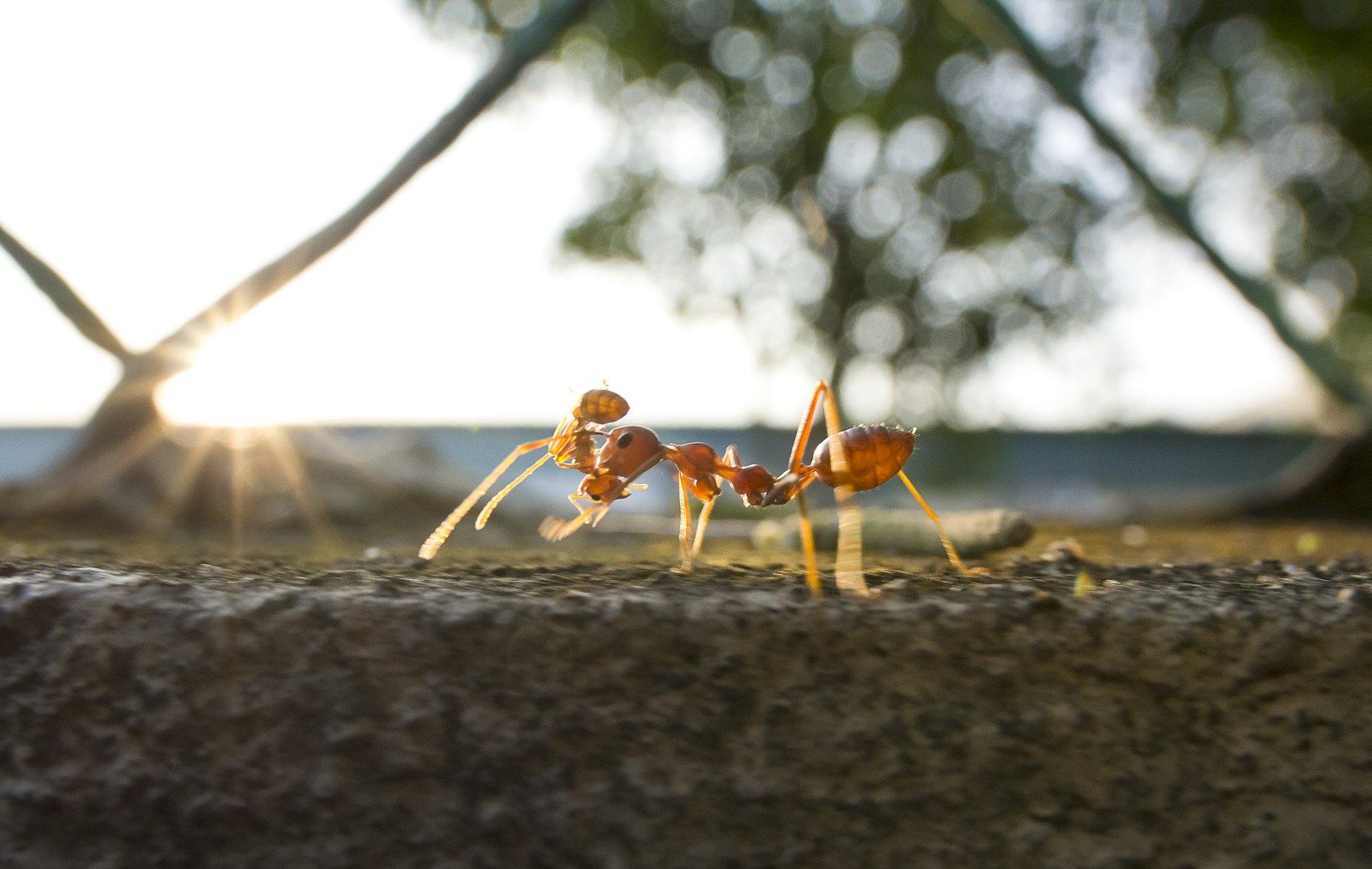 #macro#ant#colors, Lim Choo How