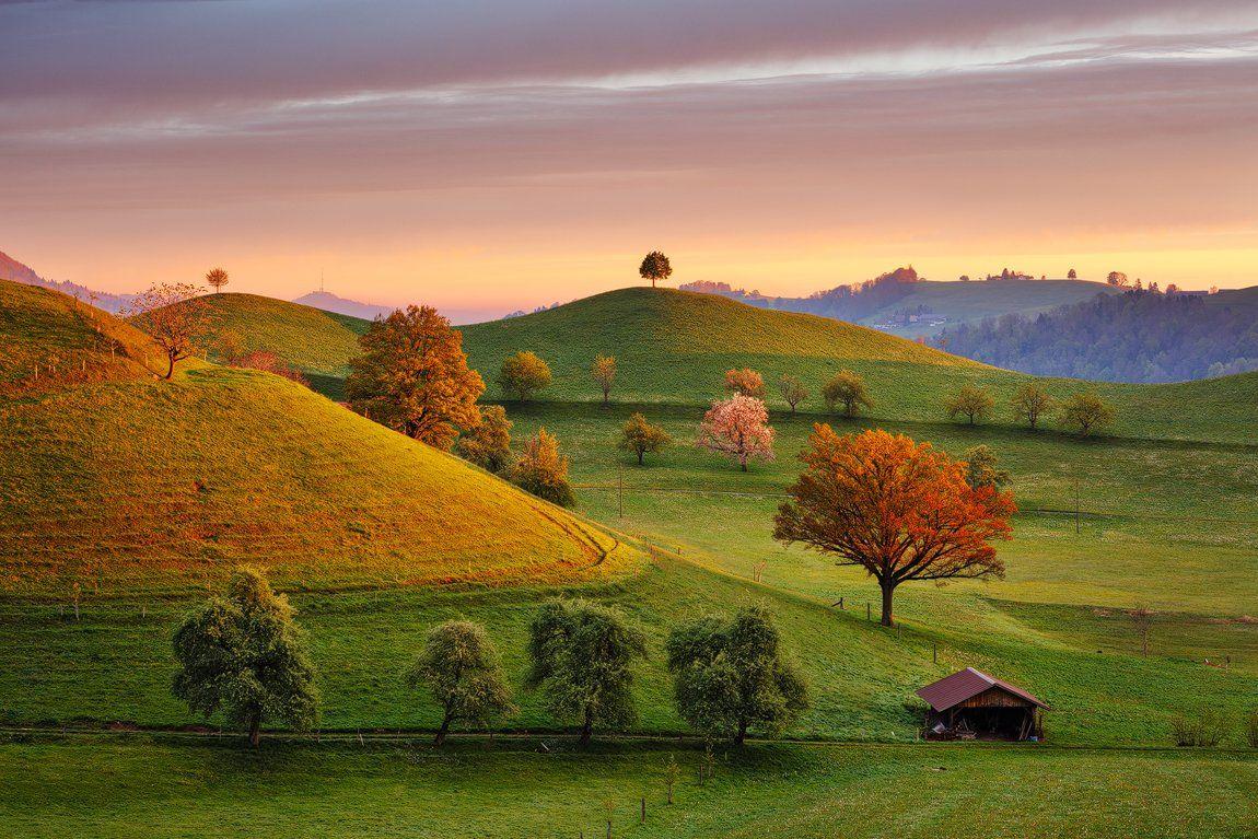 morning, hills, switzerland, spring, trees, beautiful, travel, landscape, europe, Martin Rak