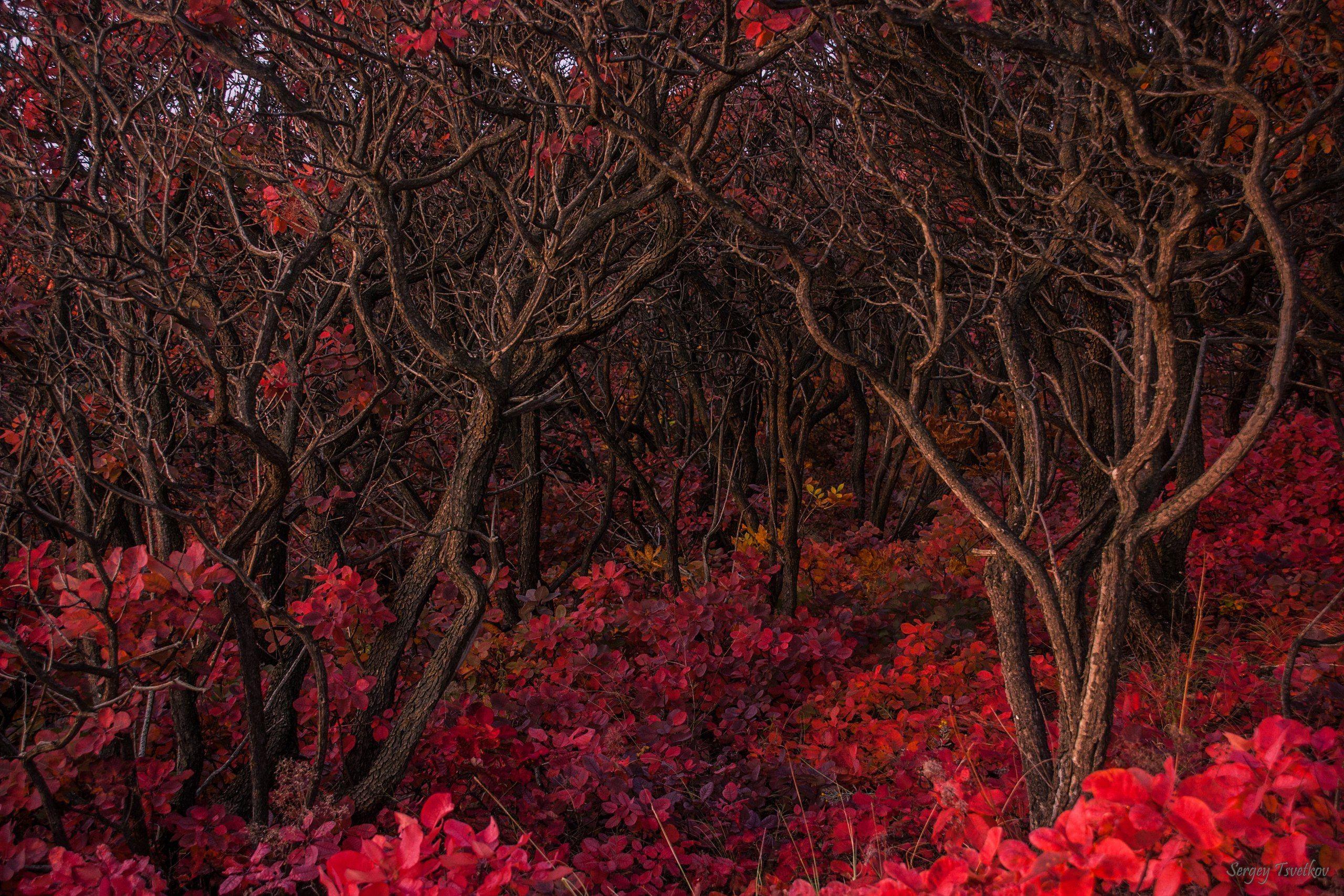 пейзаж, лес, природа, осень, Цветков Сергей
