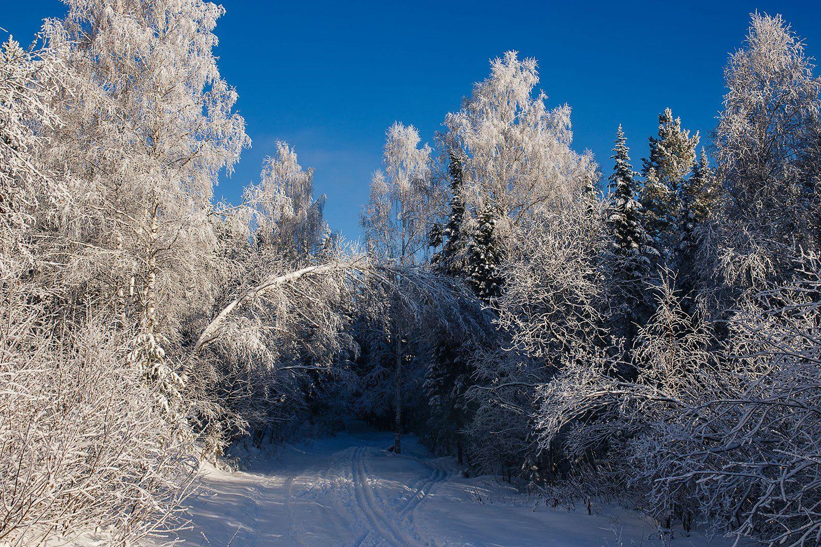 зима, лес, природа, урал, златоуст, пейзаж, снег, заснеженные деревья, Евгений Толкачёв