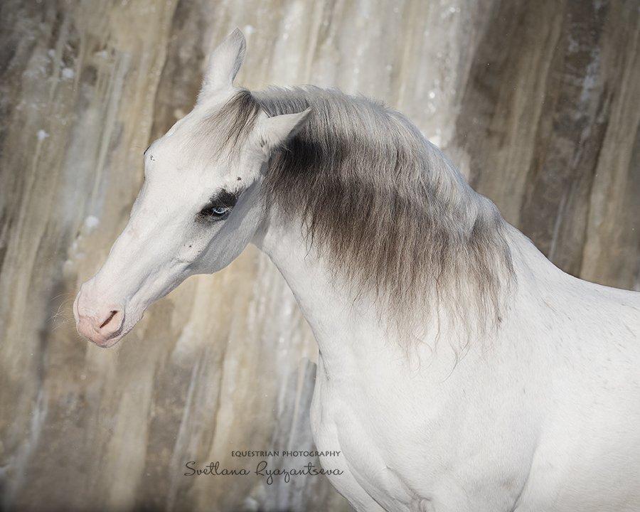 horse, лошадь, лошади, details, portrait, Svetlana Ryazantseva