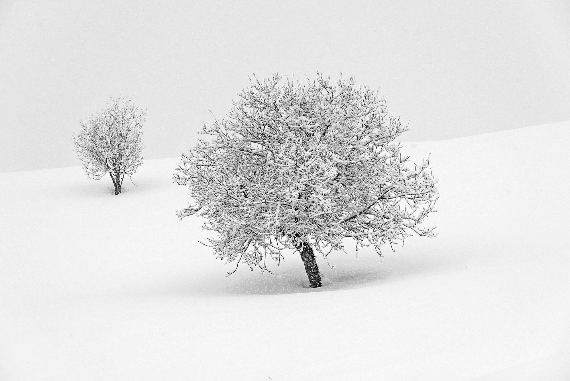 алтай, зима, снег, дерево, сибирь, снегопад, Павел Филатов