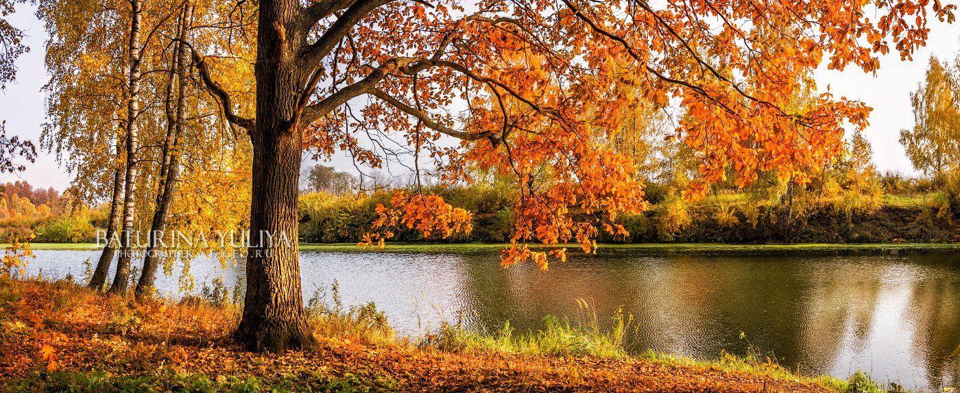 осень, пейзаж, река, пруд, осенний пейзаж, дуб, Юлия Батурина