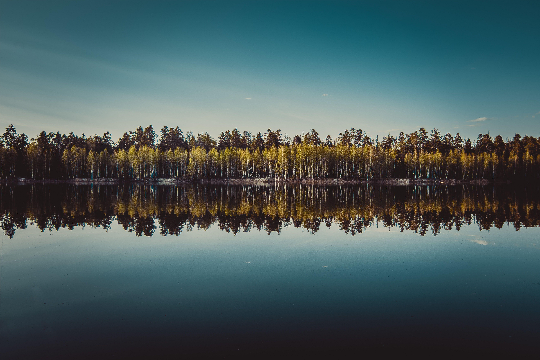 Пейзаж, озеро, природа, лес, деревья, небо, Василий